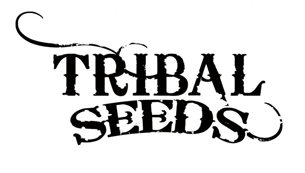 Photo of Tribal Seeds – Dawn Of Time live at Ruta Maya in Austin, Texas 10/1/10
