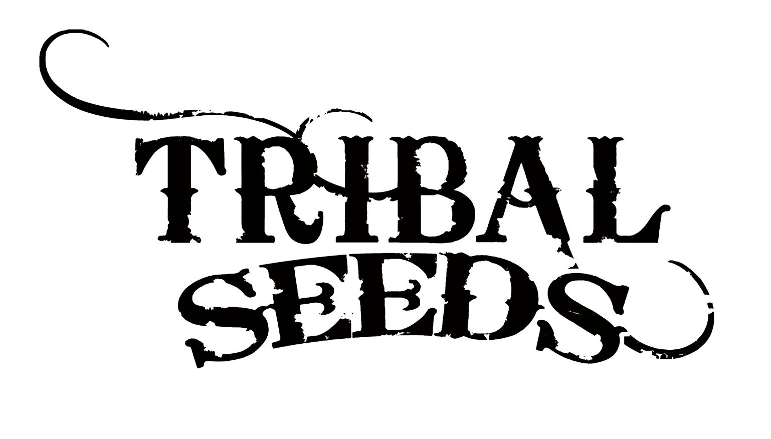 """Photo of Tribal Seeds – """"The Garden"""" live at Ruta Maya in Austin, Texas 10/1/10"""